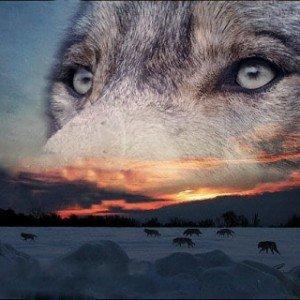 Coucher de soleil-esprit du loup