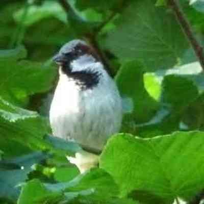 Ani-Oiseau-C'est encore moi, le locataire