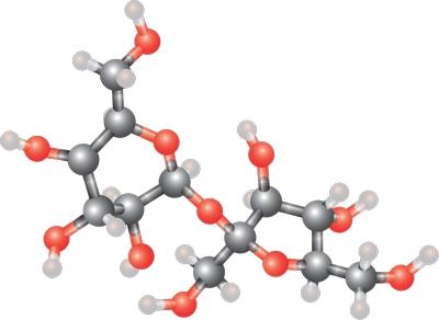 Atome-molécule de sucre